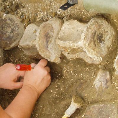 """Finitura di dettaglio dei blocchi contenenti le vertebre di """"Brunella""""."""