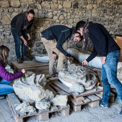 """Gli studenti iniziano a lavorare sulle ossa fossili di """"Brunella""""."""