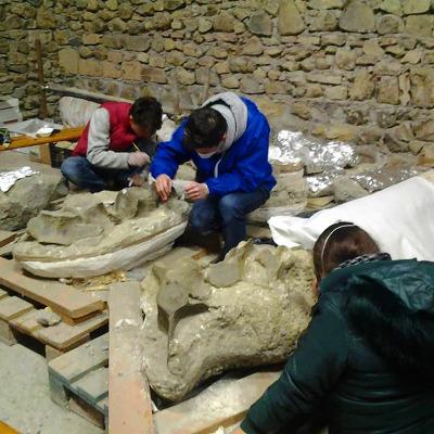 """Studenti intenti al restauro dello scheletro di """"Brunella""""."""