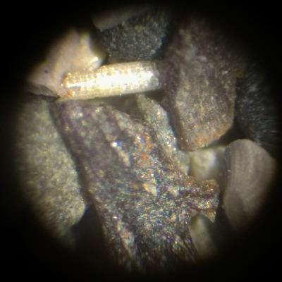 Ecco cosa si può vedere al microscopio ottico ad un ingrandimento di soli 10x: frammenti ossei, un radiolo di un riccio di mare e un microfossile unicellulare (in basso a destra).